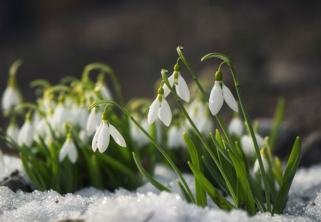 8 Winter Flowers that Will Brighten a Gray Garden