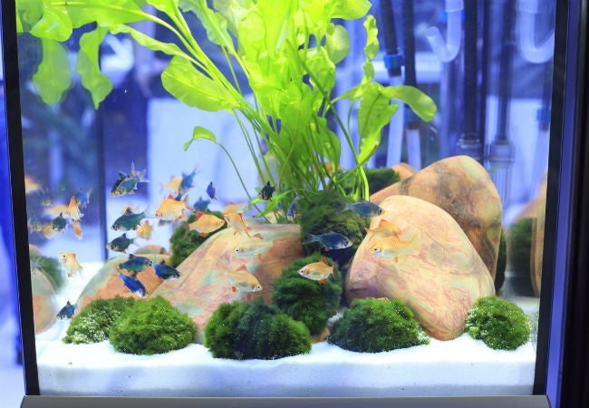 How to Clean a Fish Tank in 6 Easy Steps