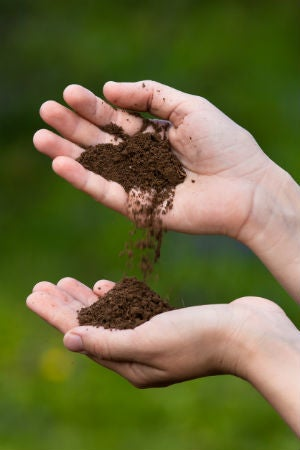 All You Need to Know About Loamy Soil