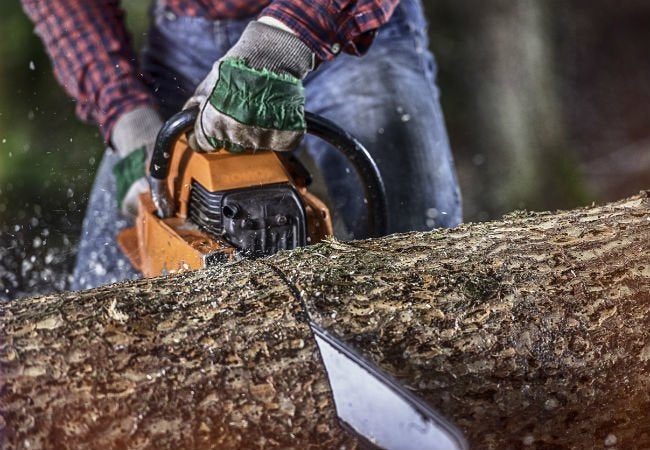 Dos and Don'ts of Felling a Tree