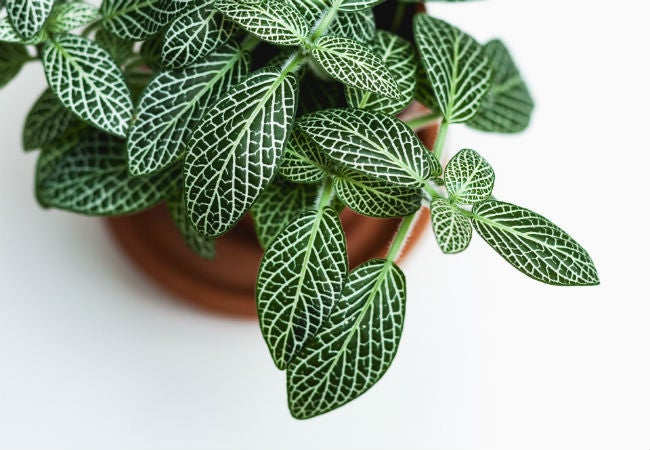 Tips for Buying Plants Online