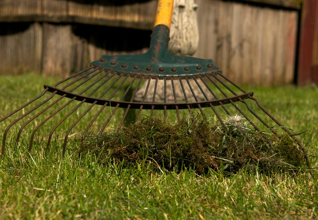 How to Get Rid of Moss in the Lawn