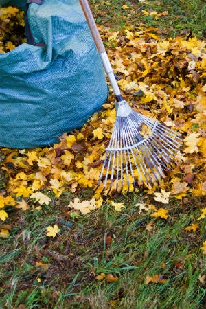 6 Things to Know Before Burning Leaves This Fall