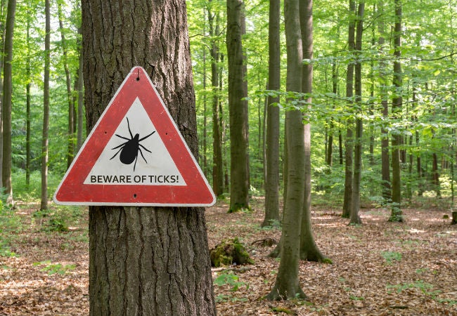 Solved: What to Do When You Find Ticks in the House
