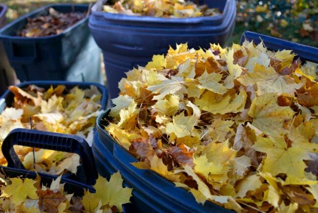 Burning Leaves Pick Up Leaves