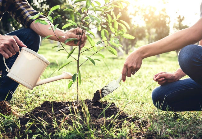 The Best Time to Plant a Tree, Solved