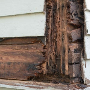 How to Prevent and Repair Wood Rot's Damage