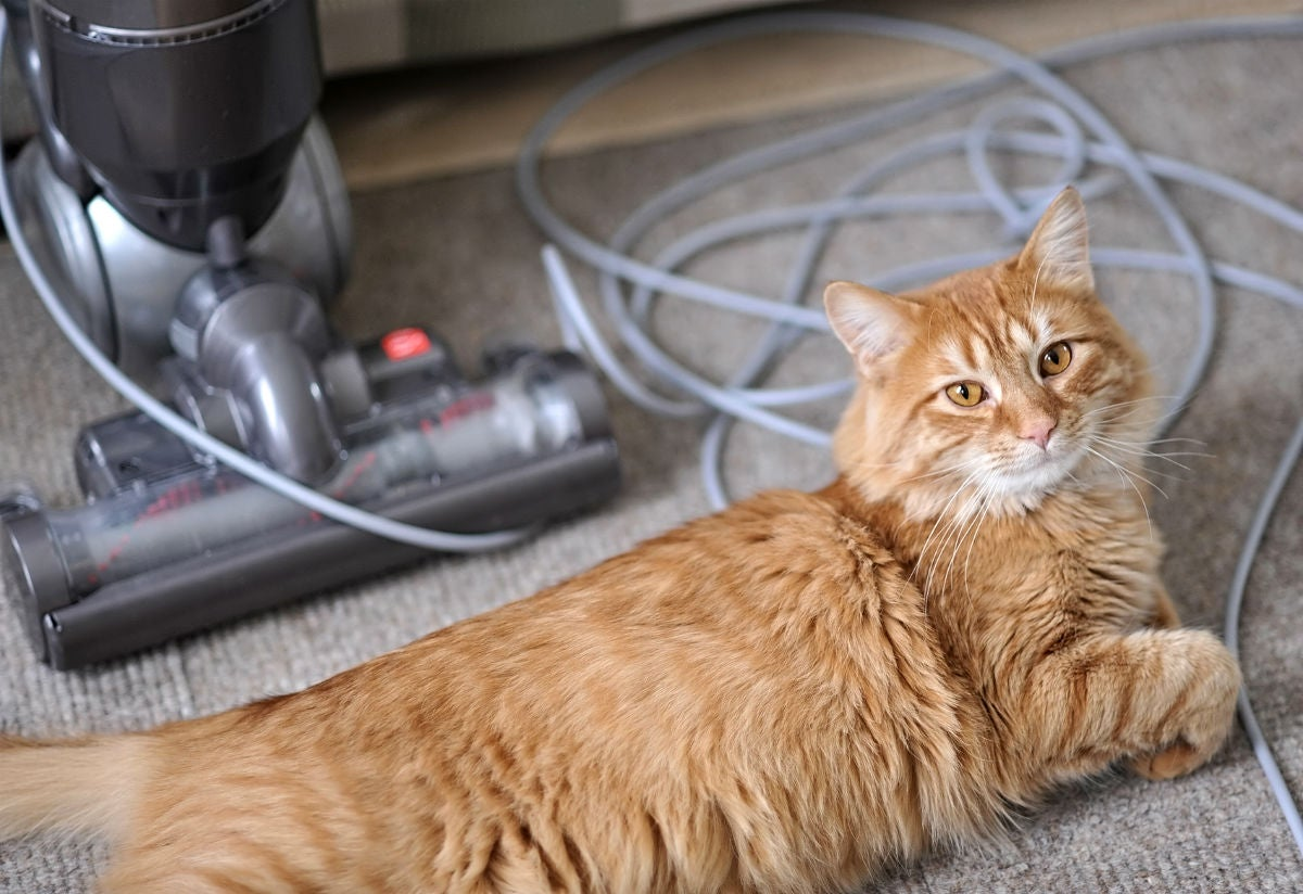 How Often Should You Vacuum a House with Pets? Solved!