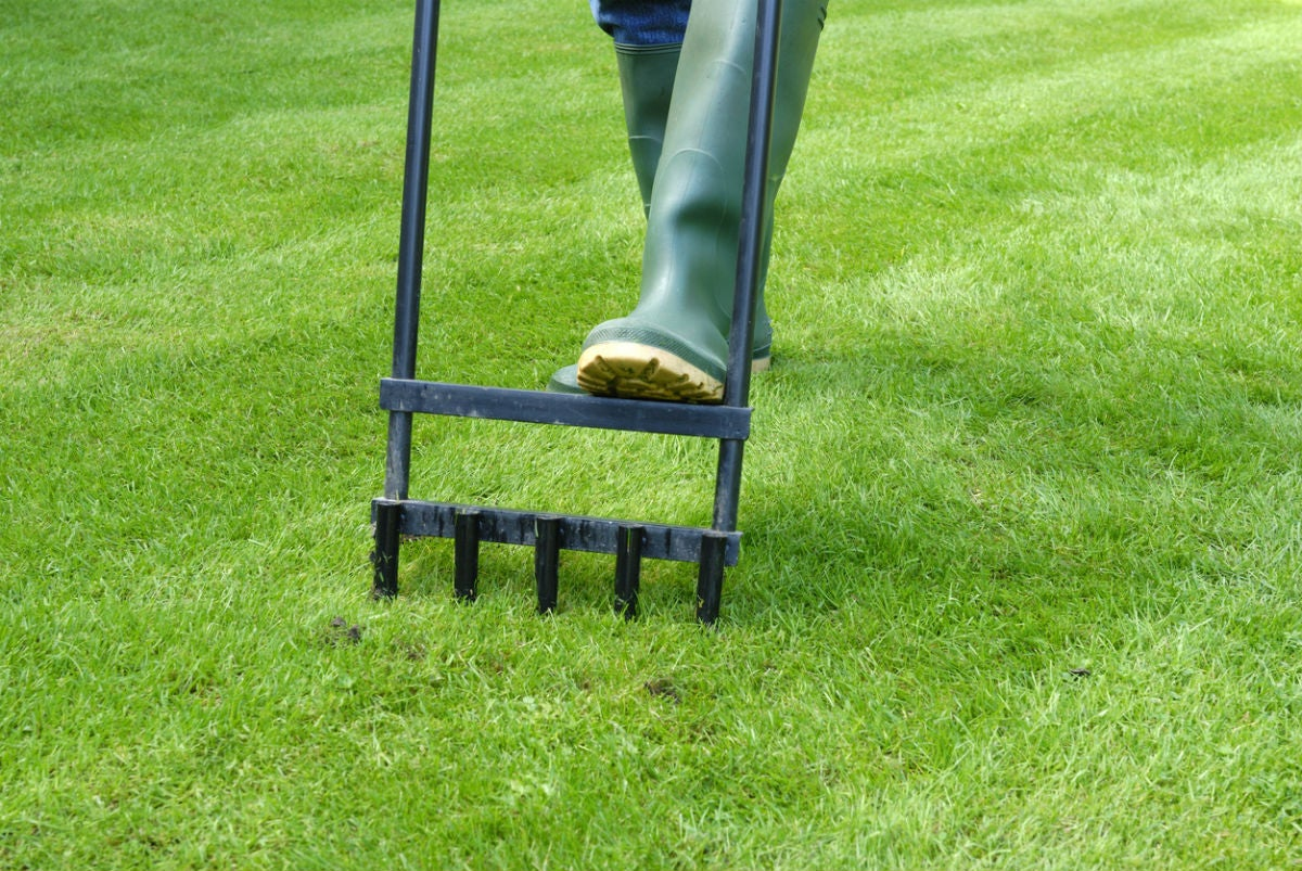 When to Aerate the Lawn? Solved!