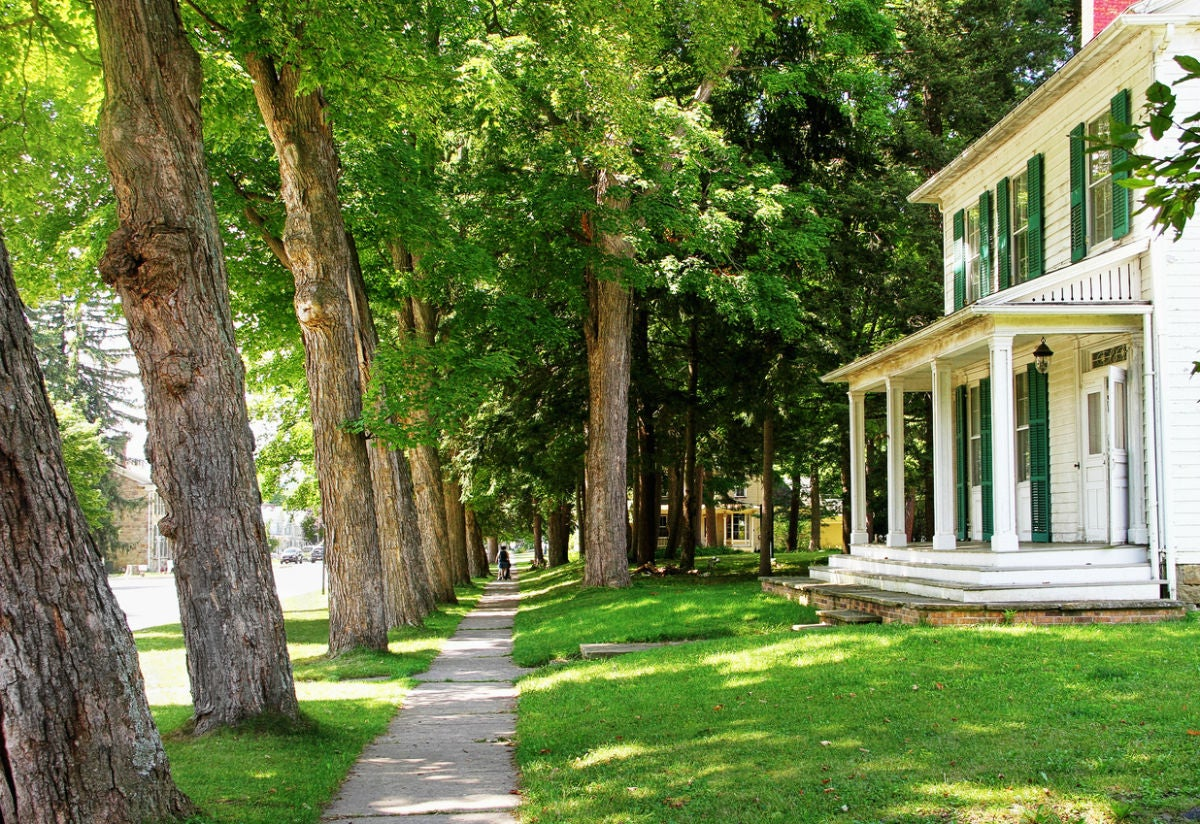 The Best Warm-Season and Cool-Season Grasses for Shade, Solved!