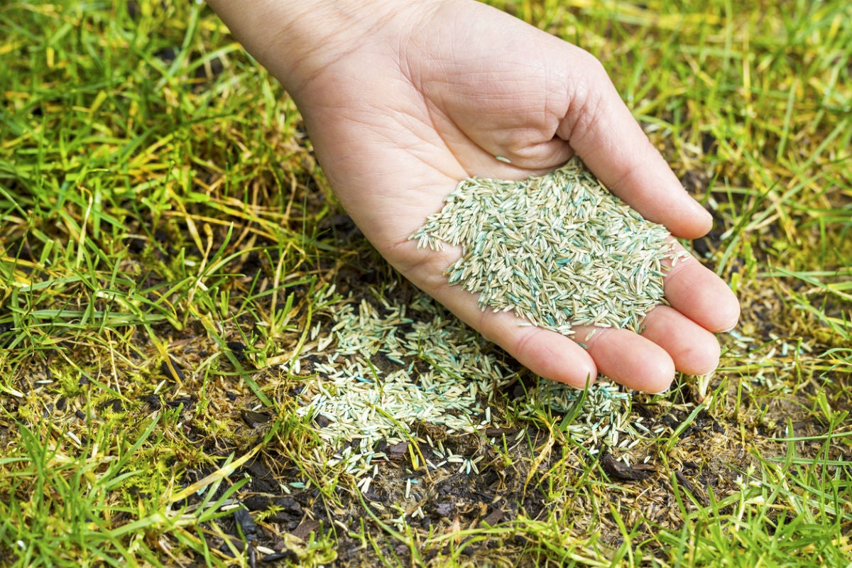 Choose This Fast-Growing Grass Seed for Patchy Lawns