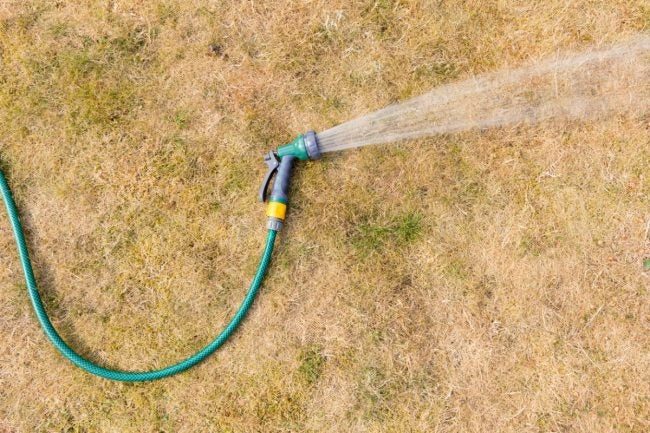 These Types of Drought-Resistant Grass Will Best Survive a Dry Summer