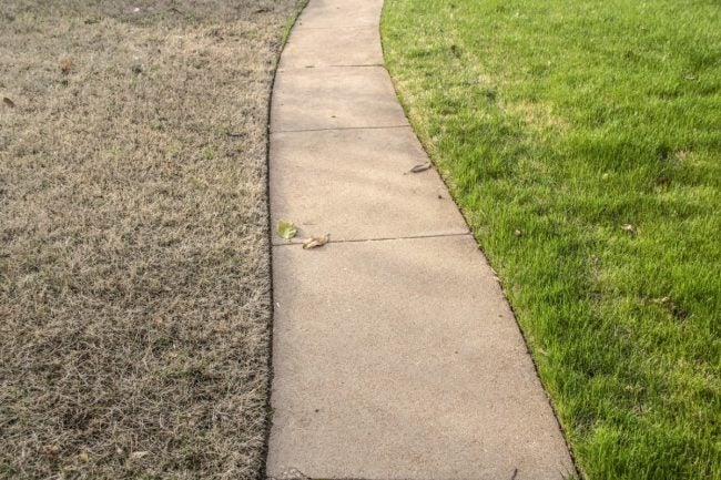 These Types of Drought-Tolerant Grass Will Best Survive a Dry Summer