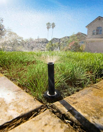 How Long to Water Lawn 7 Tips