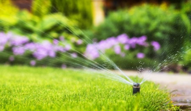 Here's How Long to Water the Lawn Each Week