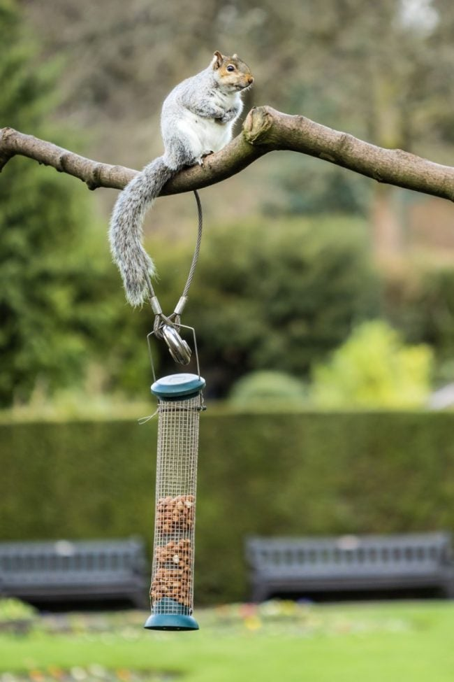 Stop Squirrels in Bird Feeders