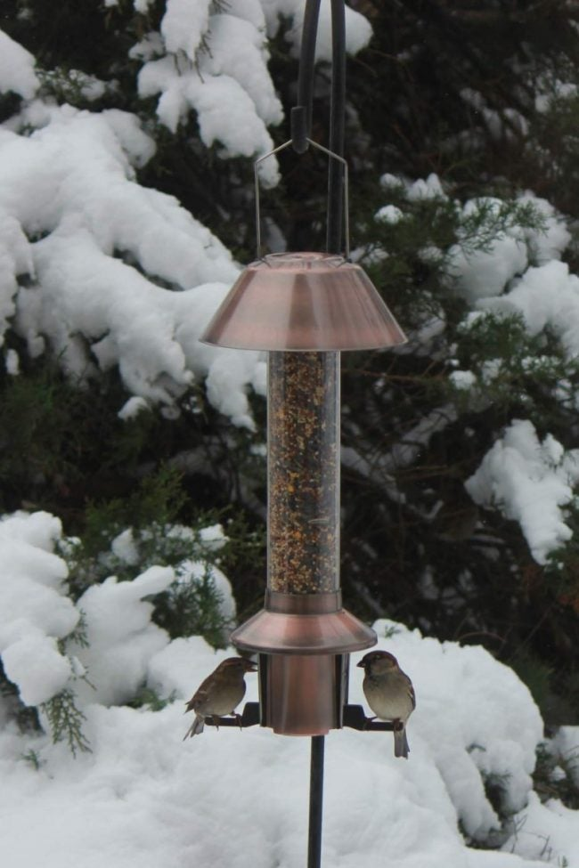 Protect Birdseed from Squirrels in Bird Feeders with a Roamwild Feeder