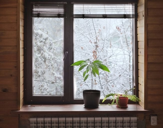 Increase Humidity When Caring for Plants in Winter