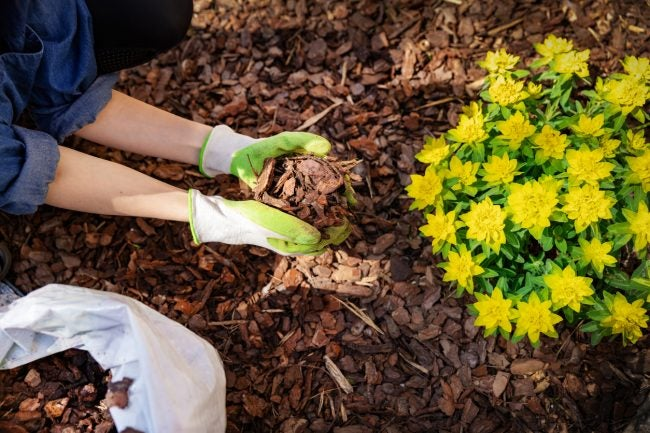 Dos and Don'ts for Mulching the Garden