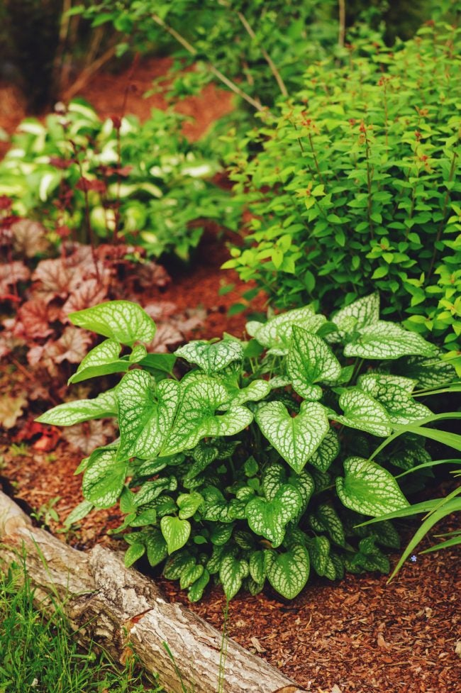 Best Tips for Mulching the Garden