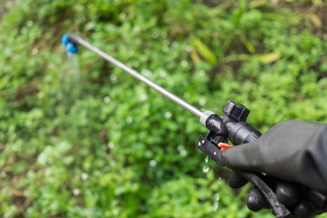 Follow Precautions When Spraying Insecticide