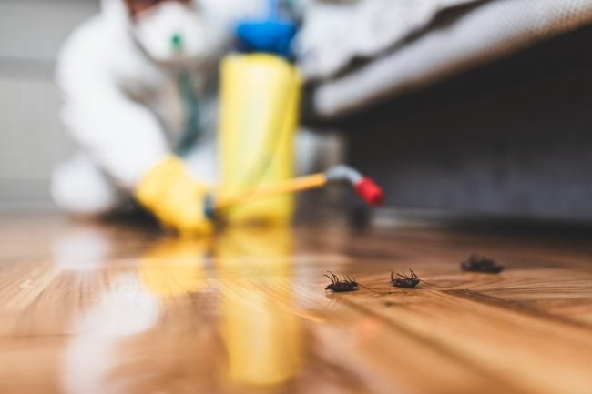 Read This Before Spraying Insecticide on an Indoor Infestation