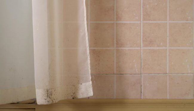 Common Types of Mold in Homes: Brown Mold on Textiles