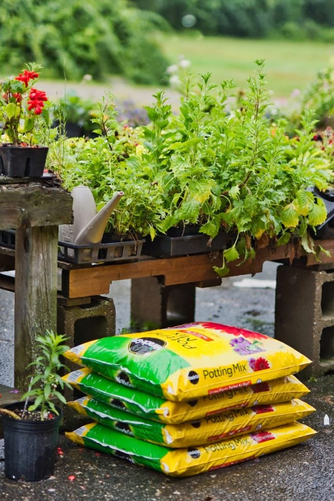 Garden Soil vs. Potting Soil: Which to Put In Your Container Garden