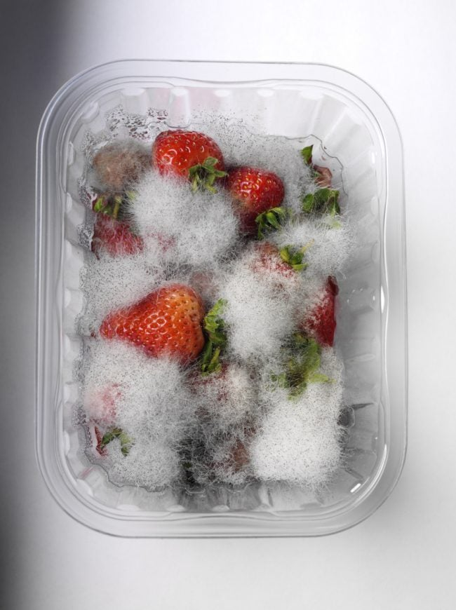 Common Types of Mold in Homes (and Fridges)
