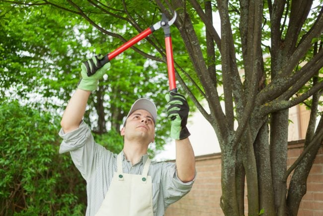 The Best Loppers for Pruning Options