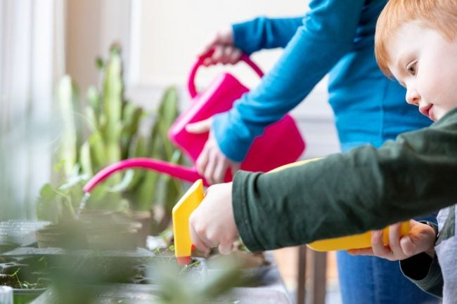 Indoor Gardening Tip: Water Consistently