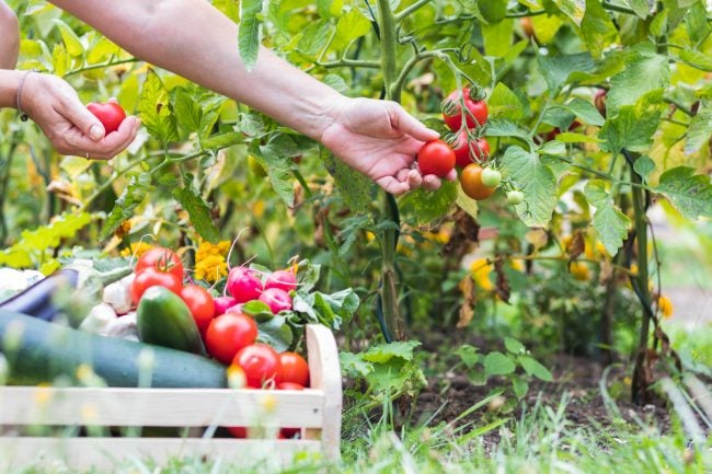 Succession Planting Tips for the Best Vegetable Garden Harvest