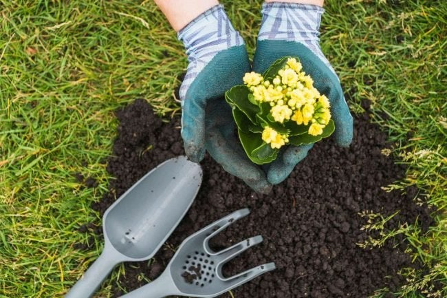 8 Top Tips for How to Use Compost