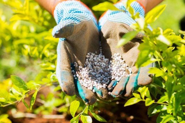 最好的花园肥料选择