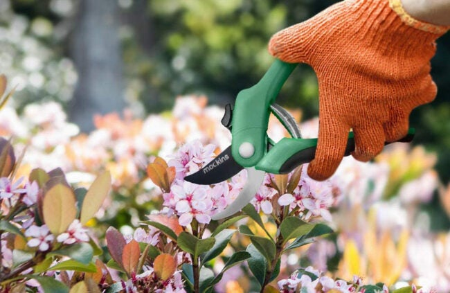 The Best Pruning Shears Options