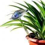 The Best Automatic Plant Waterer Option: WonderKathy Glass Automatic Plant Watering Globes