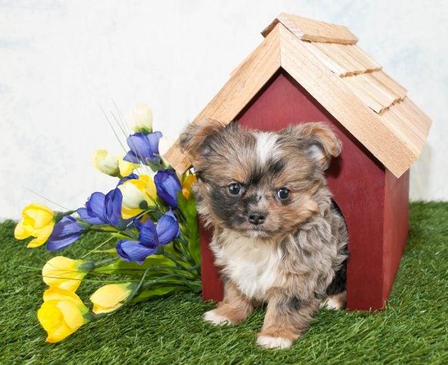 Best Dog Houses Options