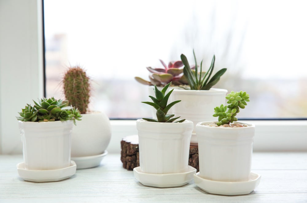 White Marble Pattern Ceramic Pots Drainage Hole Bamboo Wood Saucer Planters Plants Indoor Garden Succulent Flower 4 inch Set of 3