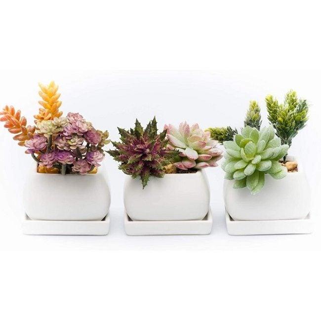 Best Pots For Succulents Kralix