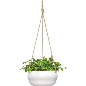 Best Pots For Succulents Mkono