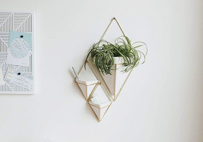 The Best Hanging Planter Options
