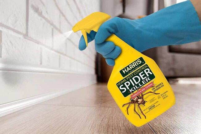最好的蜘蛛杀手选择