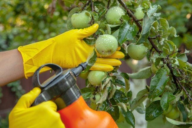 最好的蔬菜花园杀虫剂