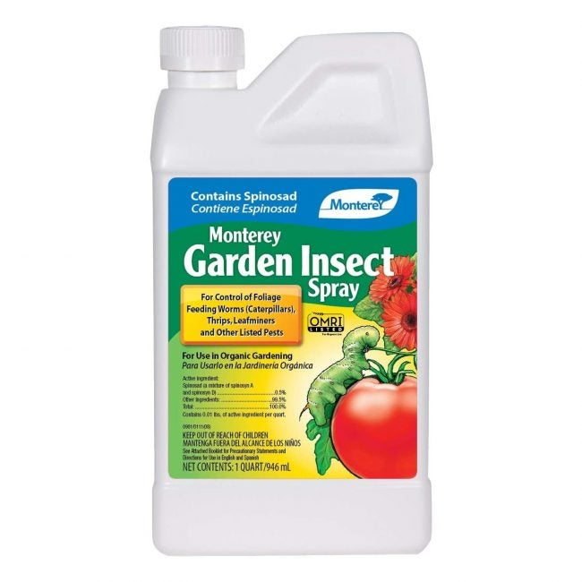 菜园蒙特雷的最佳杀虫剂