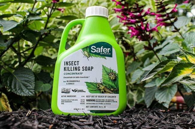 The Best Insecticide for Vegetable Garden Option