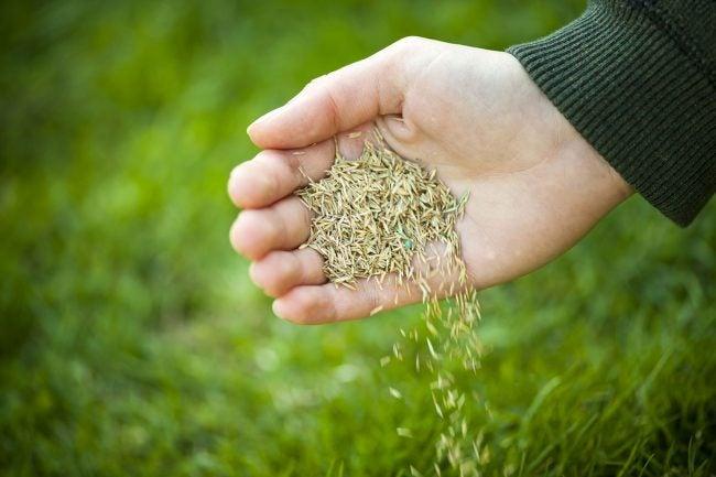 Do Seeds Expire