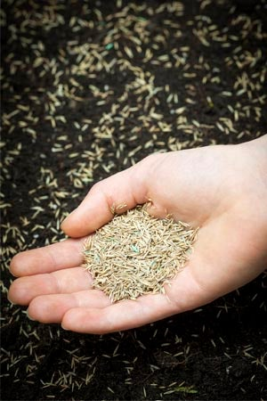 Does Grass Seed Go Bad: Seed Quality Impact