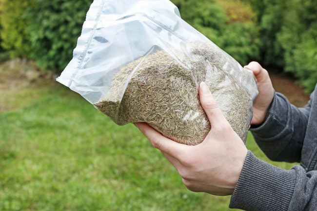 Does Grass Seed Go Bad: Storing Grass Seeds