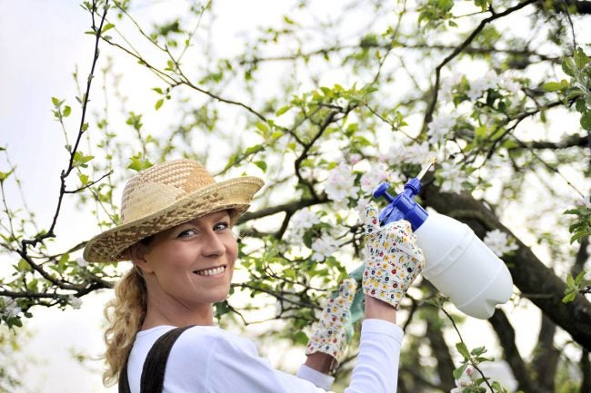 Solved! The Best Time to Spray Fruit Trees