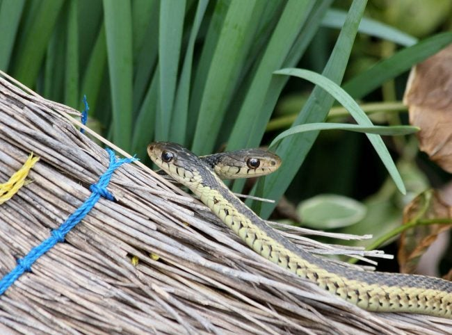 The Best Snake Repellent: Tips For Keeping The Snakes Away From Your Yard